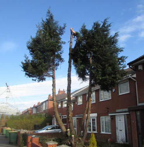 tree-removal-Chester