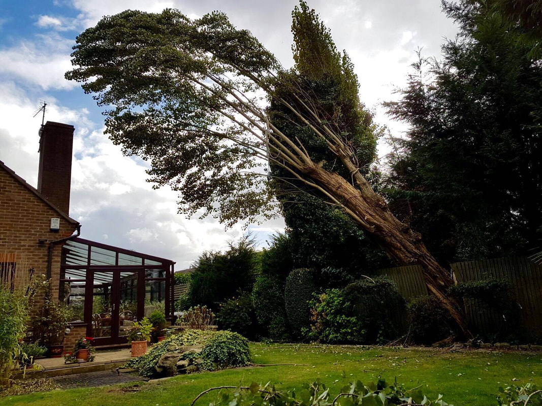 tree-removals-Chester