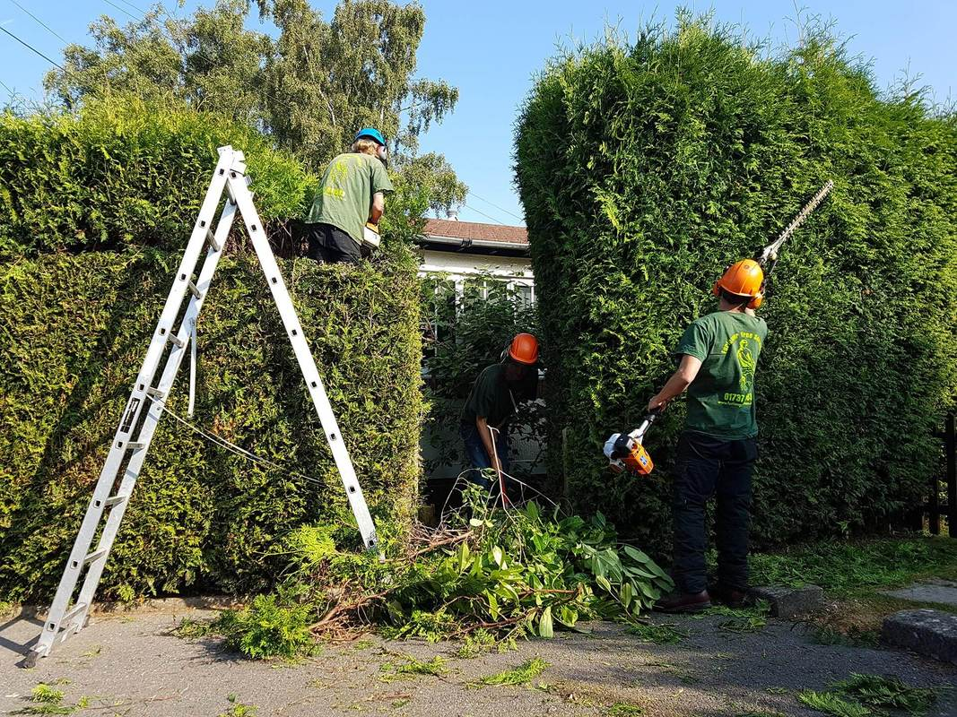 hedge-cutting-Chester