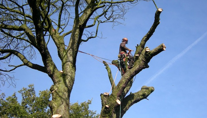 Chester-tree-surgeon