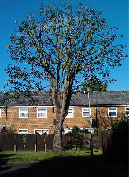 tree-surgeon-Chester