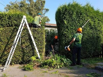 hedge cutting Chester