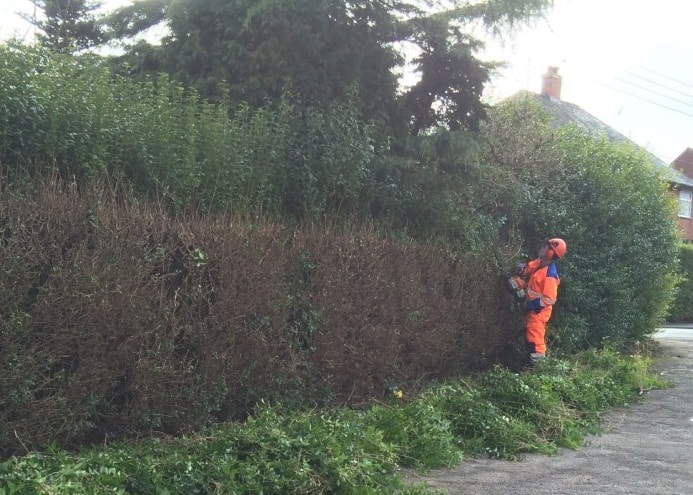 hedge trimming Chester